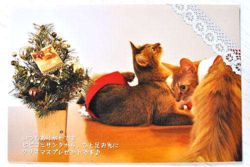 カレンダー ビビコニちゃん