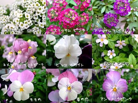 お花リスト