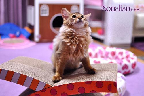 ソマリ リッカ